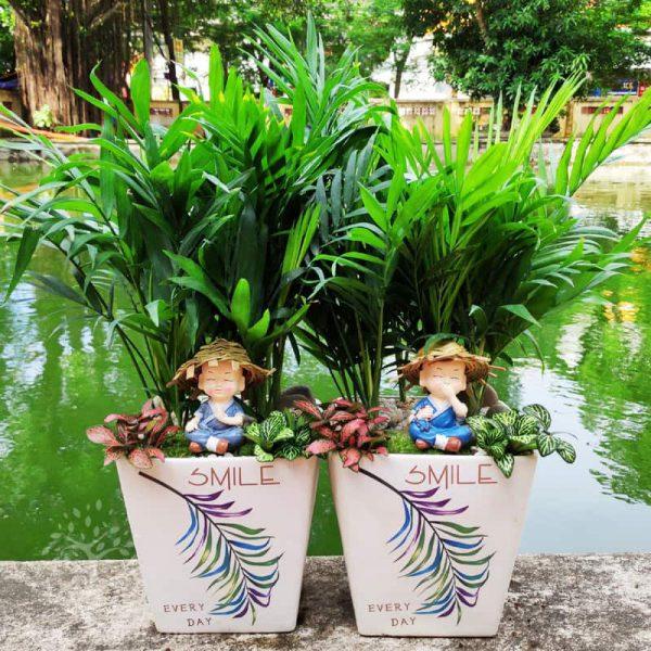 Cây cau tiểu trâm để bàn mini - Vườn cây xinh