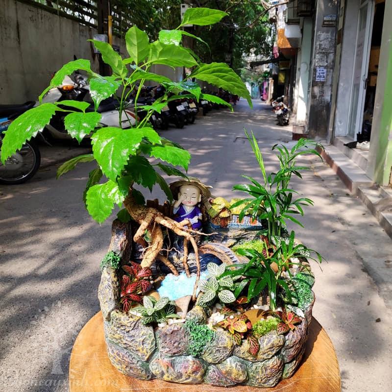 Cây hạnh phúc để bàn tiểu cảnh - Vườn cây xinh