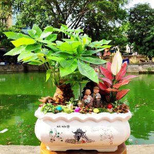 Cây kim ngân để bàn | Tiểu cảnh mini - Vườn cây xinh