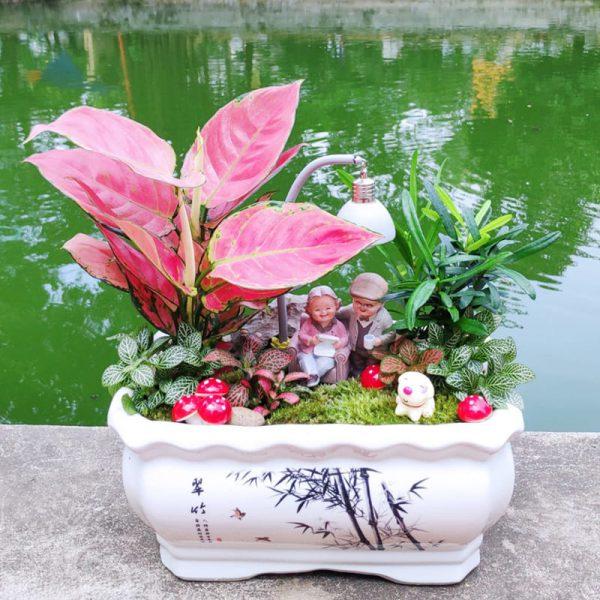 Cây vạn lộc đỏ mini để bàn - Vườn cây xinh