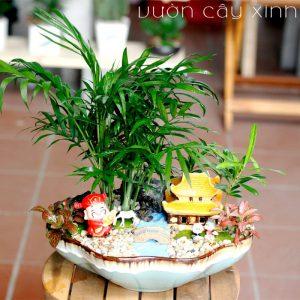Cau tiểu trâm để bàn   Vườn Cây Xinh