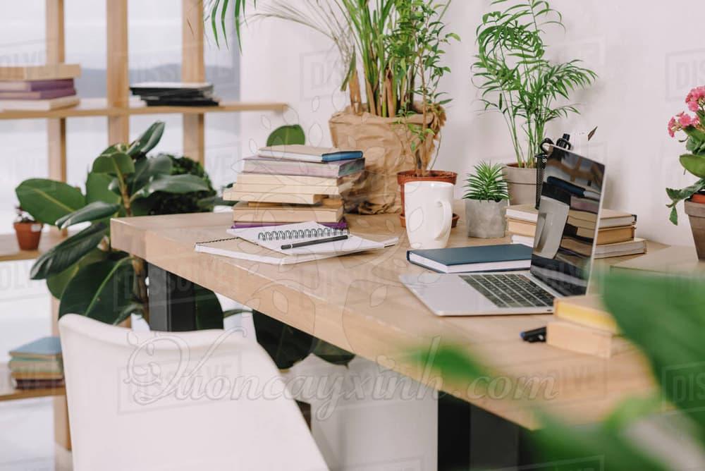 Cây để bàn làm việc theo mệnh - Vườn cây xinh