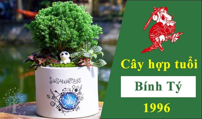 Tuổi Tý hợp cây gì   Cây phong thủy hợp tuổi Bính Tý 1996   Vườn Cây Xinh