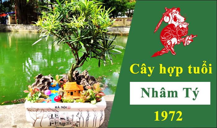 Cây phong thủy tuổi tý 1972   Vườn Cây Xinh