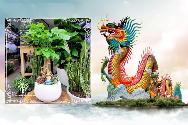 Tuổi Canh Thìn 2000 hợp cây gì? Vườn Cây Xinh