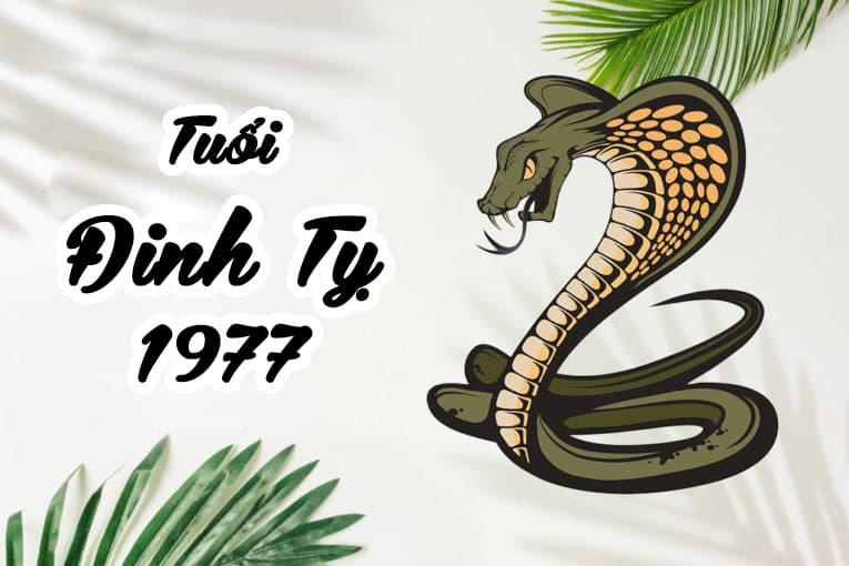 Tuổi Đinh Tỵ 1977 hợp cây gì? Vườn Cây Xinh
