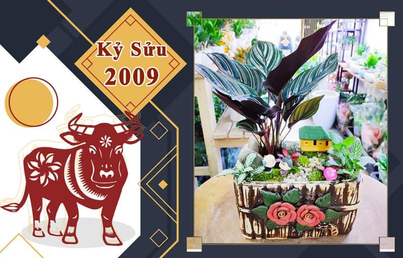 Tuổi Kỷ Sửu 2009 hợp cây gì? Vườn Cây Xinh