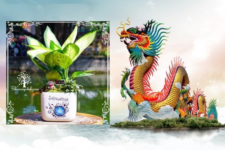 Tuổi Mậu Thìn 1988 hợp cây gì? Vườn Cây Xinh