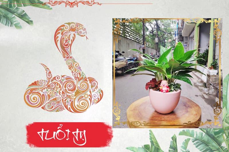 Tuổi Tân Tỵ 2001 hợp cây gì? Vườn Cây Xinh