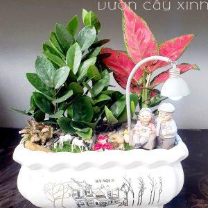 Cây kim tiền để bàn | Quà tặng tân gia | Vườn Cây Xinh