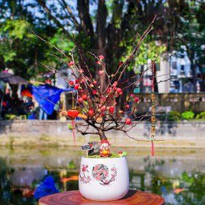 Vườn cây xinh: Chuyên cây cảnh để bàn
