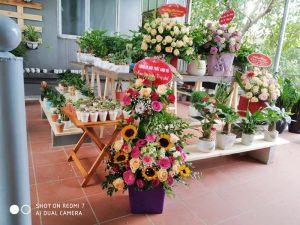 Quà tặng sự kiện doanh nghiệp | Vườn Cây Xinh