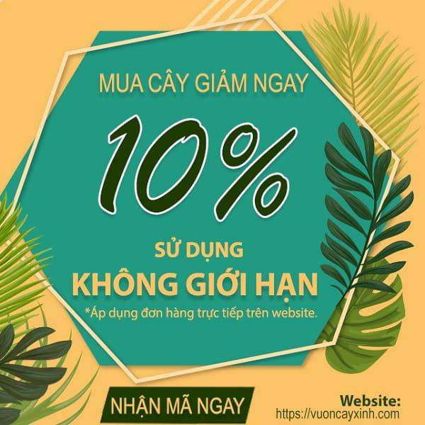Hướng dẫn lấy mã giảm giá   Vườn Cây Xinh