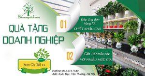 Quà tặng doanh nghiệp, quà tặng đối tác | Vườn Cây Xinh
